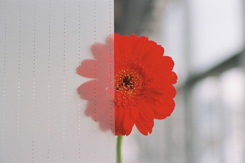 Rosso Acoustic Folie_8